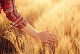 Female farmer touching wheat crop ears in field - 169200997