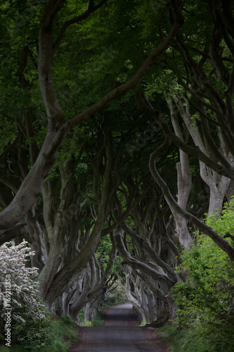 mystical dark hedges in northern ireland Poster