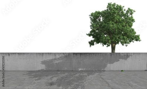 Foto Murales Eiche hinter einer Betonmauer freigestellt vor weißem Hintergrund