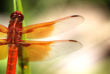 Flight of the Dragonfly - 169240973