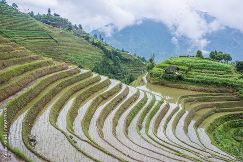 Fotobehang Rijstvelden Rice Terraces