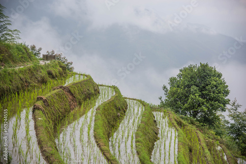 Fotobehang Bleke violet Rice Terraces