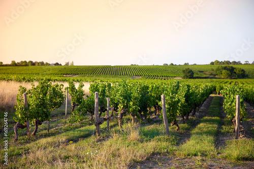 Papiers peints Beige Vigne sur les coteaux du Layon > Loire > France