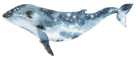 Watercolor blue whale © ivofet