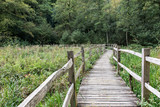 wooden Walkway though nature resever