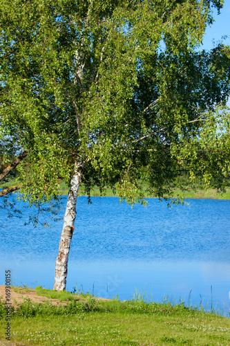 Summer Russian landscape with a birch near Volga River.