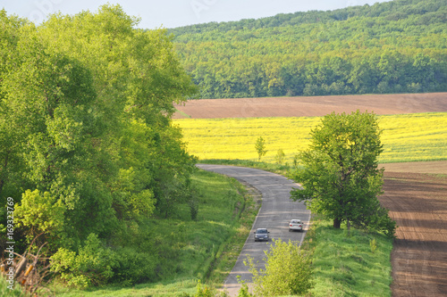 Aluminium Zalm Treated fields, forest, blue sky with clouds. Beautiful summer landscape. Summer landscape under gray sky. Plowing, rape flowers, asphalted road