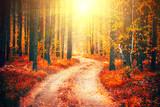 Autumn scene. Beautiful autumnal park with pathway. Fall nature scene