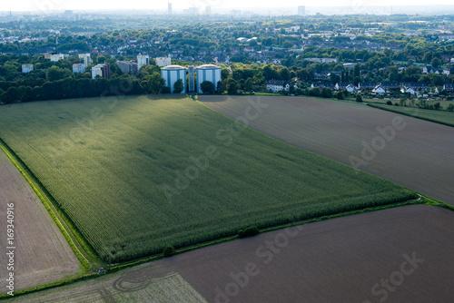 Luftaufnahme  großes Maisfeld vor Wohngebiet / Siedlung mit Häusern