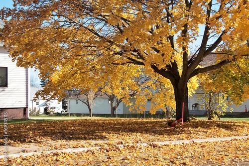 Fotobehang Herfst Falling Leaves