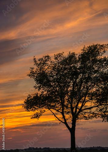 Papiers peints Orange eclat Lone Tree at Sunset