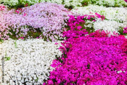 Fotobehang Purper 公園の草花の風景8