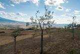 Olivi in Toscana