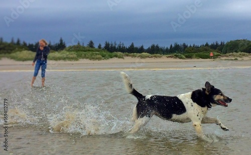 Hund rennt am Meer - 169402779