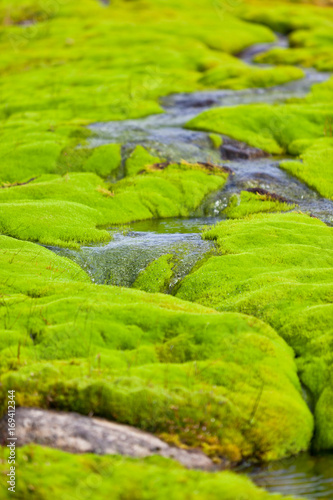 Papiers peints Vert chaux Iceland Small River Stream with green moss