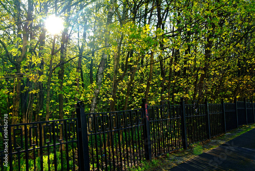 Aluminium Berkenbos a Sunny day in a Moscow Park in spring