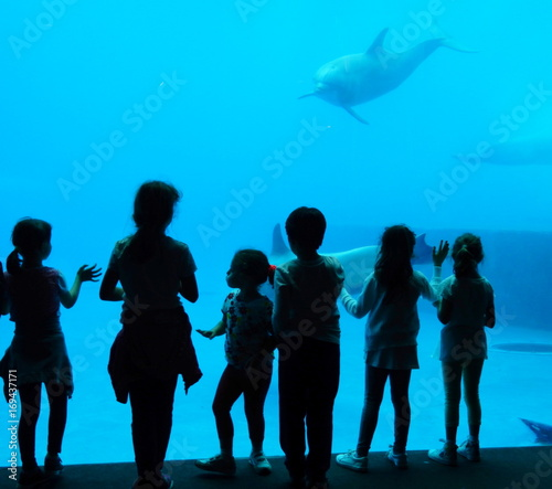 Fotobehang Dolfijn delfini in acquario