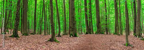 Wald Panorama mit Bäumen - 169446969