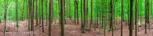 Wald Panorama Landschaft Bäume