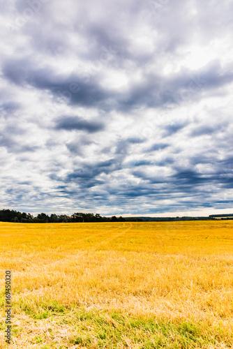 Fotobehang Honing beveled field landscape