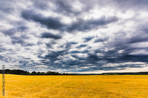Aluminium Zomer beveled field landscape