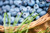 Freshly picked blueberries in rustic basket close up.