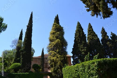 Fotobehang Chocoladebruin La Alhambra, Granada