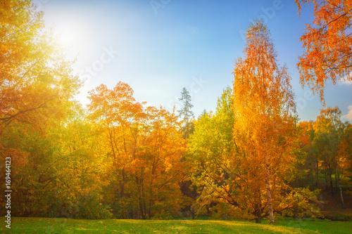 Fototapeta Autumn landscape