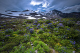 Mt. Baker North Cascades Wildflowers Landscape Mountains Scenic