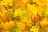 autumn leaves - 169470744