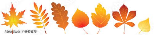 Herbstblätter Set