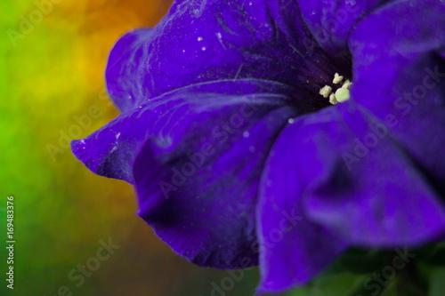 Purple Flower Macro - 169483376