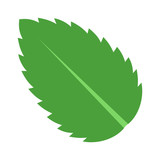 Peppermint / Spearmint mint or mentha leaf flat vector color icon for apps and websites - 169500520
