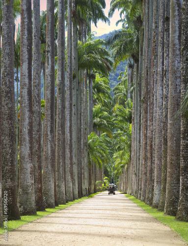 Foto op Plexiglas Rio de Janeiro Бразилия. Ботанический сад в Рио-де-Жанейро. «Авеню королевских пальм».