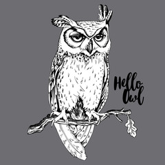 Draw of the Screech-owl on a branch on a gray background. Vector illustration.
