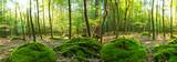 Einladung zum Entspannen und Träumen: Wald im Frühling mit Morgensonne :) - 169516900
