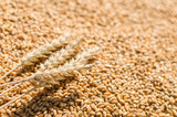 grain and wheat flakes background - 169544995