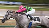 Cheval de course au galop - 169562780