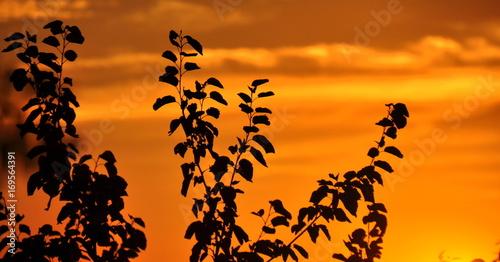 In de dag Oranje eclat Leuchtender, orangefarbener Sonnenuntergangshimmel mit Zweigen im Vordergrund
