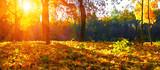 autumn trees on sun - 169567152