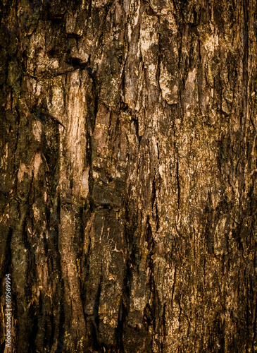 Wood bark,trunk texture background with copy space - 169569994