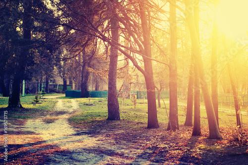 Papiers peints Jaune de seuffre Sunset in the park. Nature landscape.