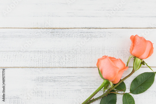 Orange roses with copy space on white wood background