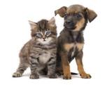 kitten and puppy - 169579391