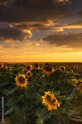 The Golden Sky Poster