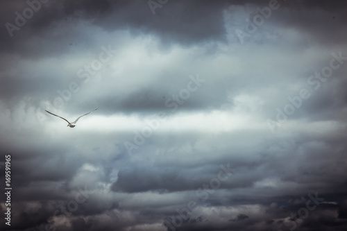 Fotobehang Chicago Möwe fliegt in grauen Wolken Himmel (Vignette)