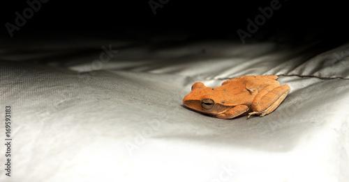 Fotobehang Kikker Frog baby orange color