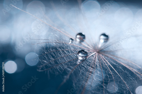 Fotobehang Paardebloemen A beautiful and artistic image of a dandelion with drops on a blue background.