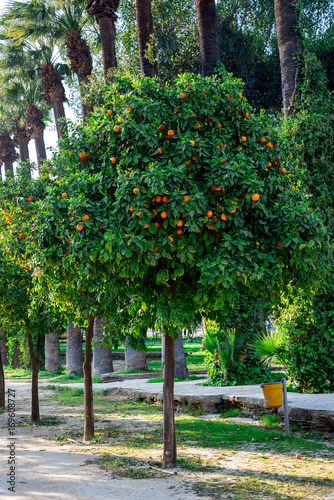 Deurstickers Cyprus Orange trees in a park alley at Nicosia city