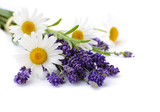 Fototapety Chamomiles and lavender flowers on white background